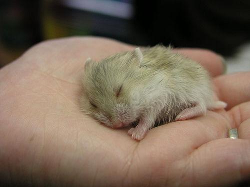 RIP Mr Hamster.